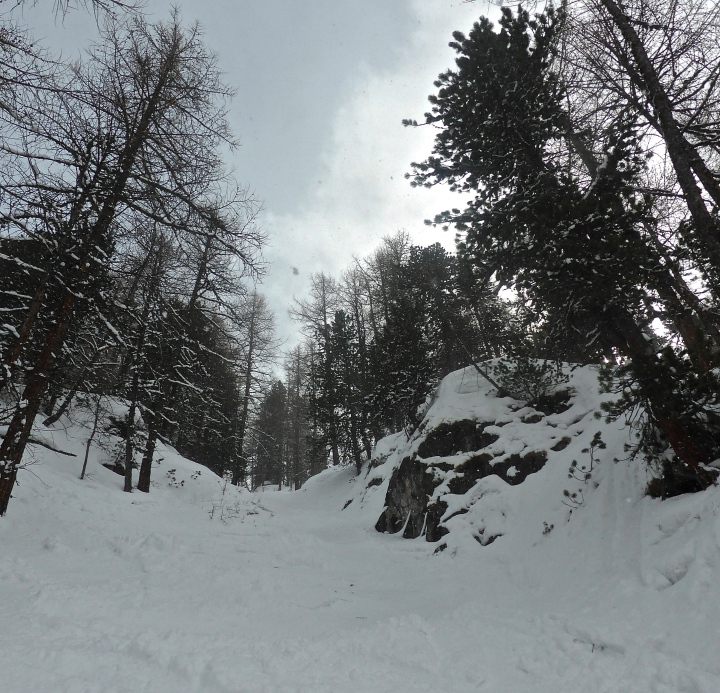 Laisinant forest: through the couloir