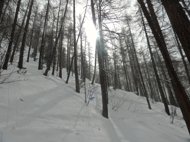Laisinant forest: tall trees, steep slopes, soft snow