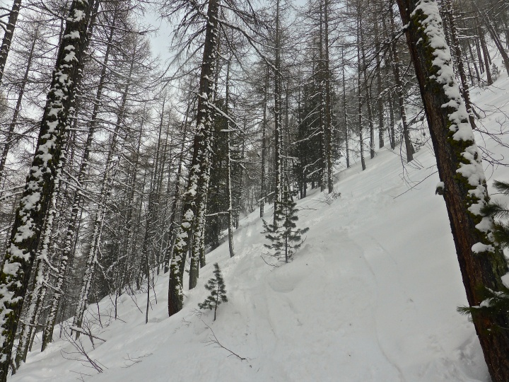 Laisinant forest: white and quiet