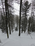 Laisinant forest: treacherous pillows