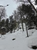 Laisinant forest: steep slopes