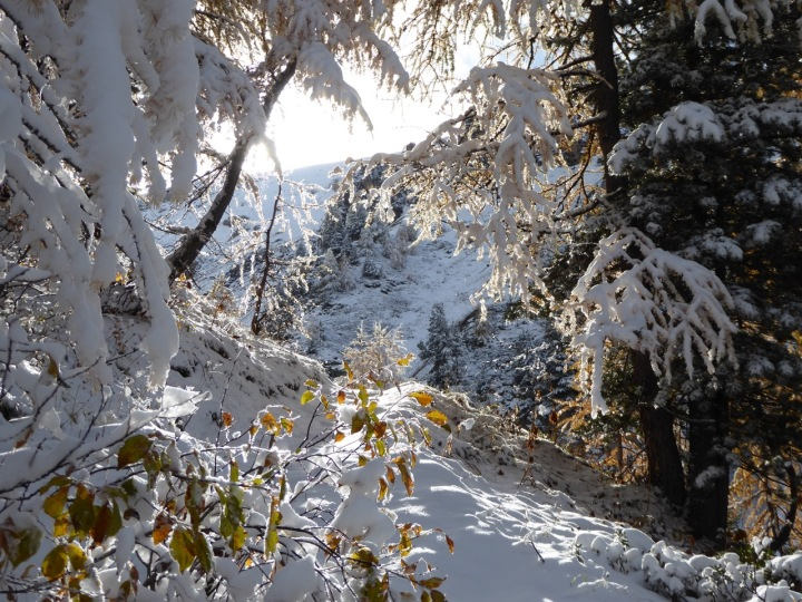 Snow holding up well in the forest above the Piste L