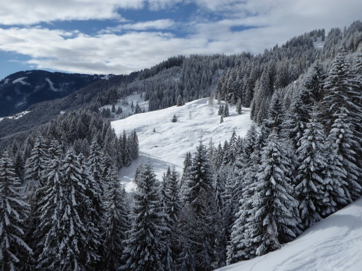 Dienten: skiing the forest off the Gabuhelbahn