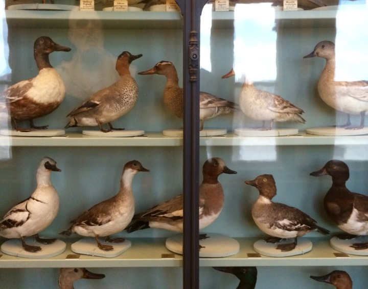Behind glass: display cabinets show suffer birds, shells, fish, or insects