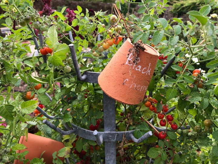 Potager Colbert: function and fun in the tomato bed