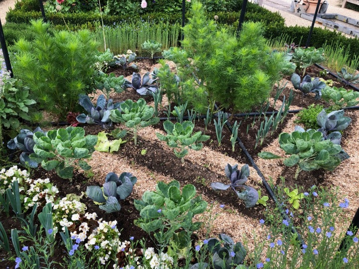 Potager Colbert: garden artistry as cabbages and leeks cohabit with cosmos and flax