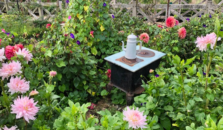 Playfulness at Potager Colbert: an old coffee pot and stove among the dahlias