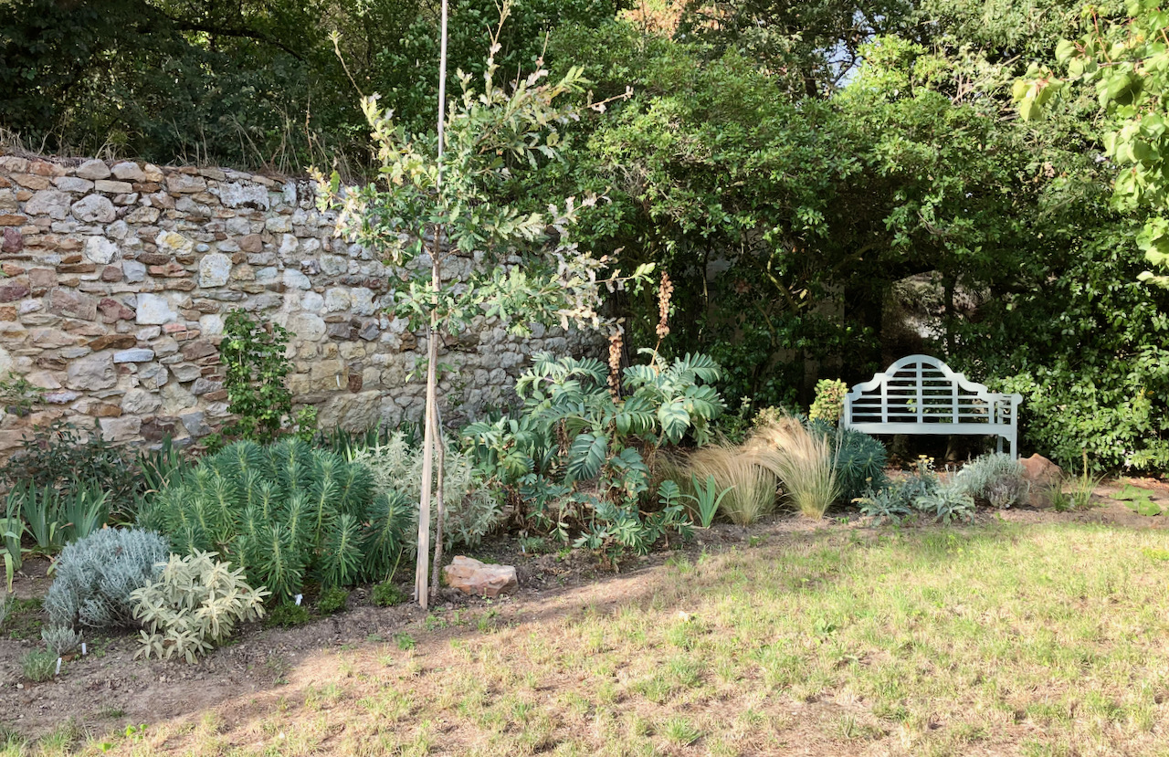 Mediterranean border with evergreen drought-tolerant plants for year-round interest