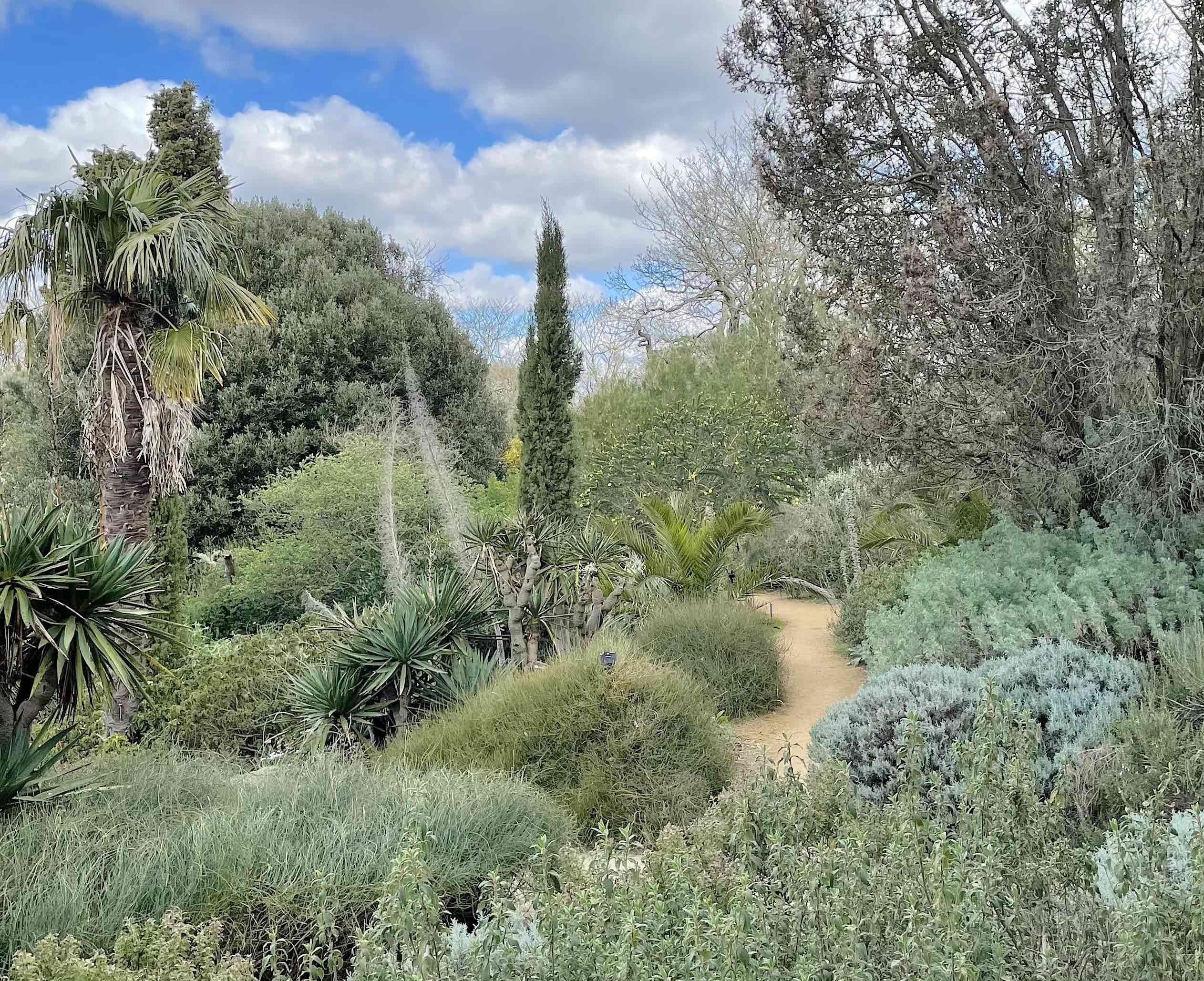 The Mediterranean garden, in Kew, is home to numerous New Zealand plants