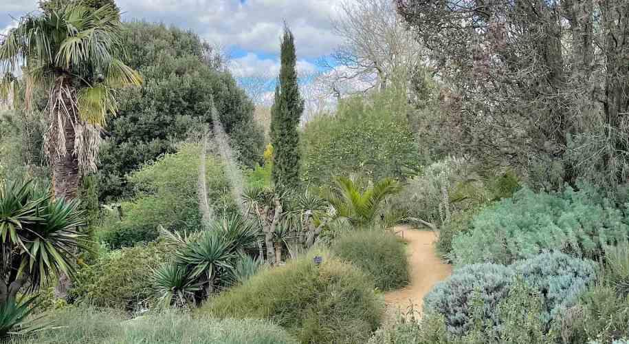 The Mediterranean garden, in Kew, home to numerous New Zealand plants
